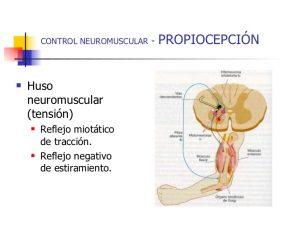 control neuromuscular y estabilidad articular 7 728 300x225 - ¿SABES CÓMO ACTÚA TU CEREBRO CUANDO ESTÁS EN UN ENTRENAMIENTO DE CICLISMO, TRIATLÓN...?