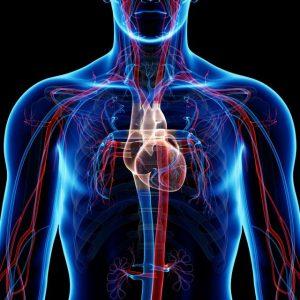 vasos sanguineos sistema cardiovascular 300x300 - 6 PUNTOS A TRABAJAR PARA MEJORAR TU RESISTENCIA