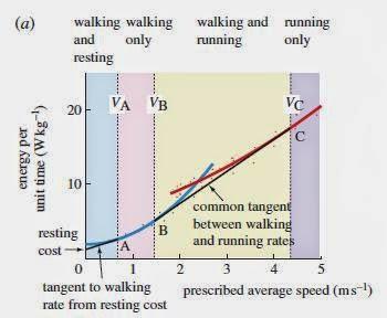 RunWalk Optimization - ¿CUÁNDO CONVIENE ANDAR EN LA MARATÓN DE UN IRONMAN?