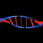 genetica humana 1080x810 150x150 - VENTAJAS DE UNA PRUEBA DE ESFUERZO Y ENTRENAMIENTO GUIADO POR PULSÓMETRO