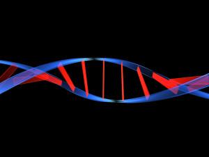 genetica humana 1080x810 300x225 - dna