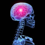 esqueleto fondos de pantalla del cerebro el humano en d 187094 150x150 - MEJORA TU RECUPERACIÓN TRAS UN ENTRENAMIENTO DE TRIATLÓN O CICLISMO CON LA HIDROTERAPIA