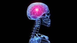 esqueleto fondos de pantalla del cerebro el humano en d 187094 300x168 - esqueleto-fondos-de-pantalla-del-cerebro-el-humano-en-d-187094
