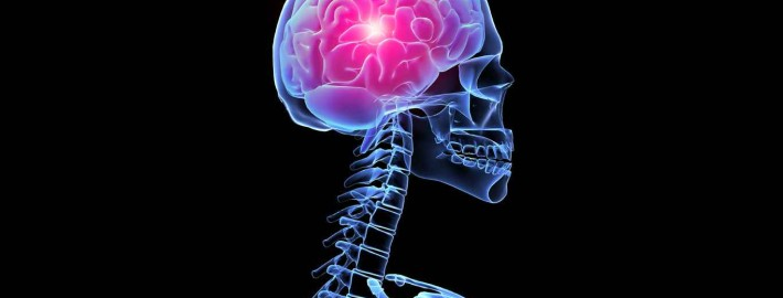 esqueleto fondos de pantalla del cerebro el humano en d 187094 710x270 - ¿CÓMO ACTÚA EL CEREBRO EN COMPETICIÓN - ENTRENAMIENTO DE CICLISMO O TRIATLÓN?