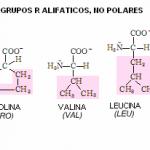 alifaticos no polares1 150x150 - LOS DEPORTISTAS DESABI SIGUEN EN LA SENDA DEL ÉXITO