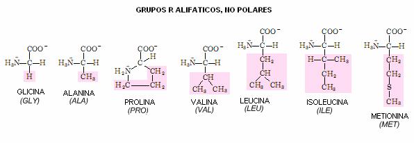 alifaticos no polares1 - EFECTOS DE LOS AMINOÁCIDOS RAMIFICADOS EN LOS DEPORTES DE RESISTENCIA